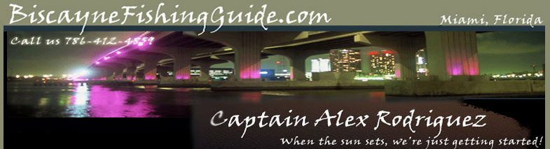 miami biscayne fishing guide charters night fishing snook tarpon trout bonefish permit miami snook fishing miami florida