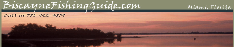 biscayne,fishing guide,charters,snook,tarpon,trout,bonefish,shallow water,flats,bay,fishing charters,guide